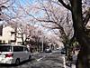 Yokomama